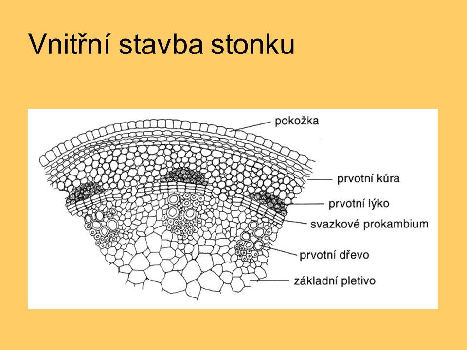 Vnitřní stavba stonku