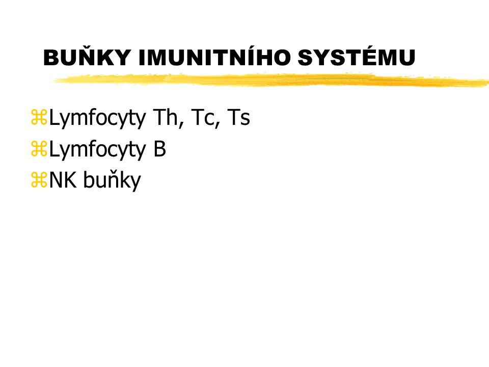BUŇKY IMUNITNÍHO SYSTÉMU zLymfocyty Th, Tc, Ts zLymfocyty B zNK buňky