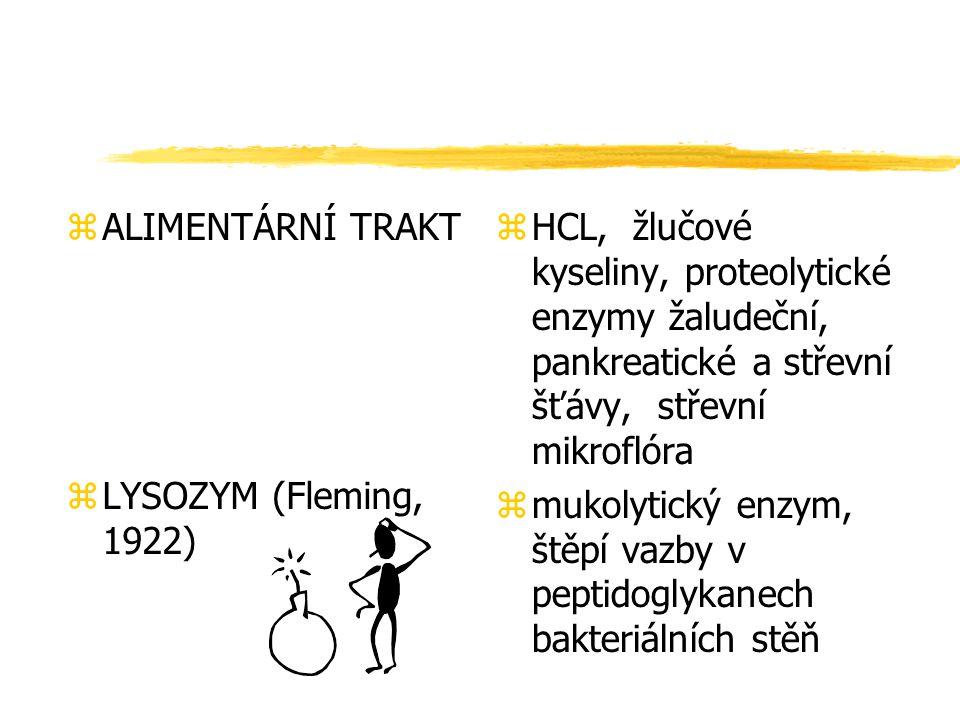 zALIMENTÁRNÍ TRAKT zLYSOZYM (Fleming, 1922) z HCL, žlučové kyseliny, proteolytické enzymy žaludeční, pankreatické a střevní šťávy, střevní mikroflóra