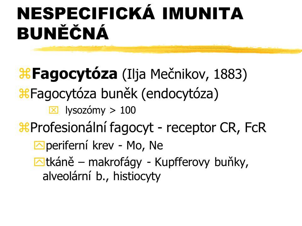 NESPECIFICKÁ IMUNITA BUNĚČNÁ zFagocytóza (Ilja Mečnikov, 1883) zFagocytóza buněk (endocytóza) x lysozómy > 100 zProfesionální fagocyt - receptor CR, F