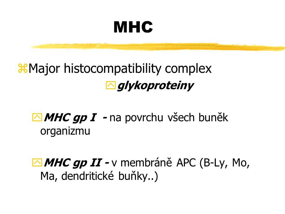 MHC zMajor histocompatibility complex yglykoproteiny yMHC gp I - na povrchu všech buněk organizmu yMHC gp II - v membráně APC (B-Ly, Mo, Ma, dendritic