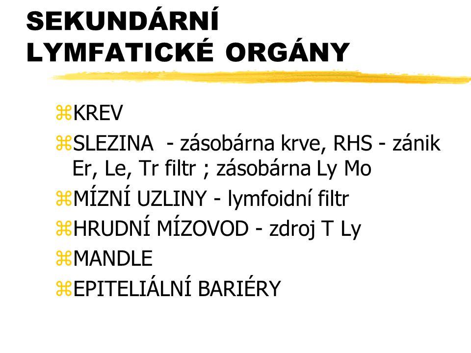 SEKUNDÁRNÍ LYMFATICKÉ ORGÁNY zKREV zSLEZINA - zásobárna krve, RHS - zánik Er, Le, Tr filtr ; zásobárna Ly Mo zMÍZNÍ UZLINY - lymfoidní filtr zHRUDNÍ M