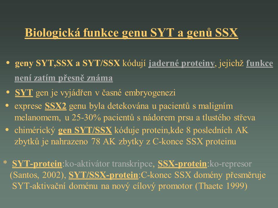 Biologická funkce genu SYT a genů SSX geny SYT,SSX a SYT/SSX kódují jaderné proteiny, jejichž funkce není zatím přesně známa SYT gen je vyjádřen v čas