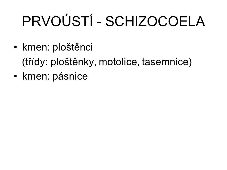 kmen: ploštěnci (Plathelminthes) dvoustranně souměrní ploché tělo (zploštění z hřbetní a břišní strany, tj.