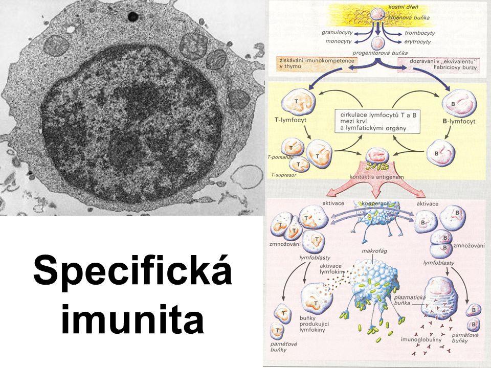 Specifická imunita