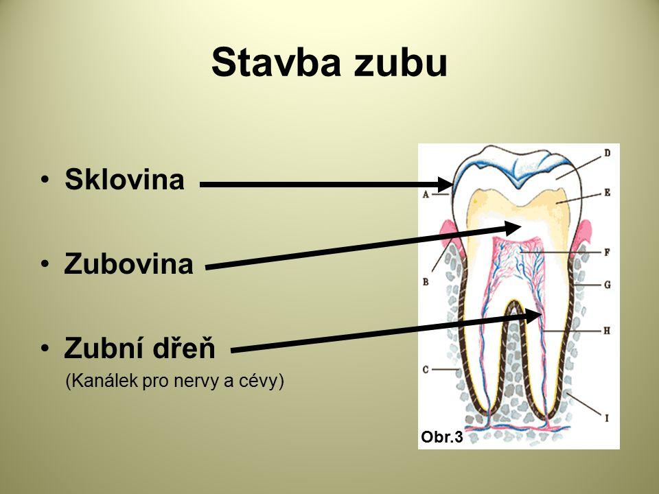 Stavba zubu Sklovina Zubovina Zubní dřeň (Kanálek pro nervy a cévy) Obr.3