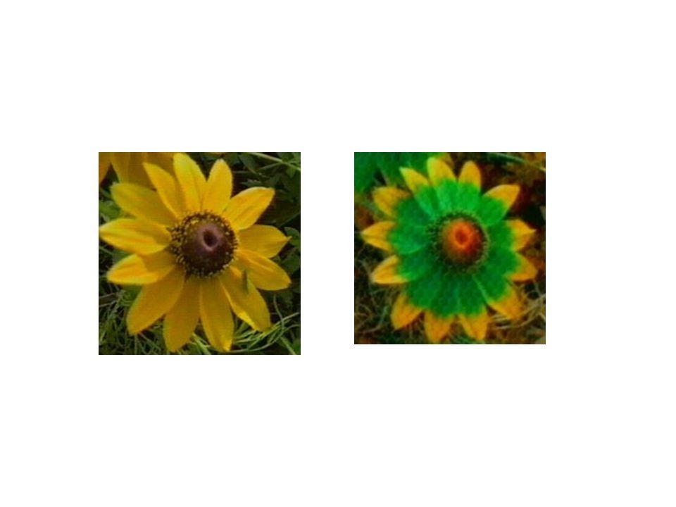 Ústní ústrojí hmyzu: kousací (brouci) lízavě-sací (moucha, včela) bodavě-sací (komáři) sací (motýli)