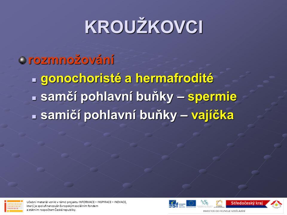 KROUŽKOVCI rozmnožování gonochoristé a hermafrodité gonochoristé a hermafrodité samčí pohlavní buňky – spermie samčí pohlavní buňky – spermie samičí p