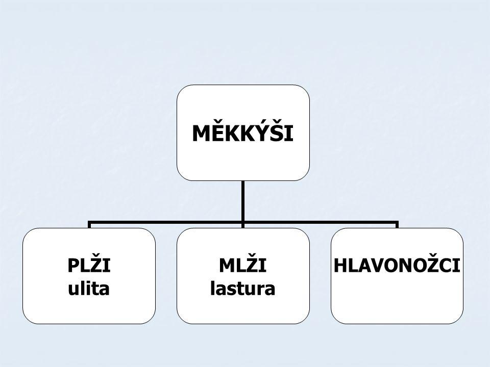 PLŽI mají ulitu, kterou zavírají víčkem mají ulitu, kterou zavírají víčkem živí se rostlinnou potravou nebo jsou draví živí se rostlinnou potravou nebo jsou draví dýchají plášťovou dutinou (je mezi tělem a pláštěm ) dýchají plášťovou dutinou (je mezi tělem a pláštěm )