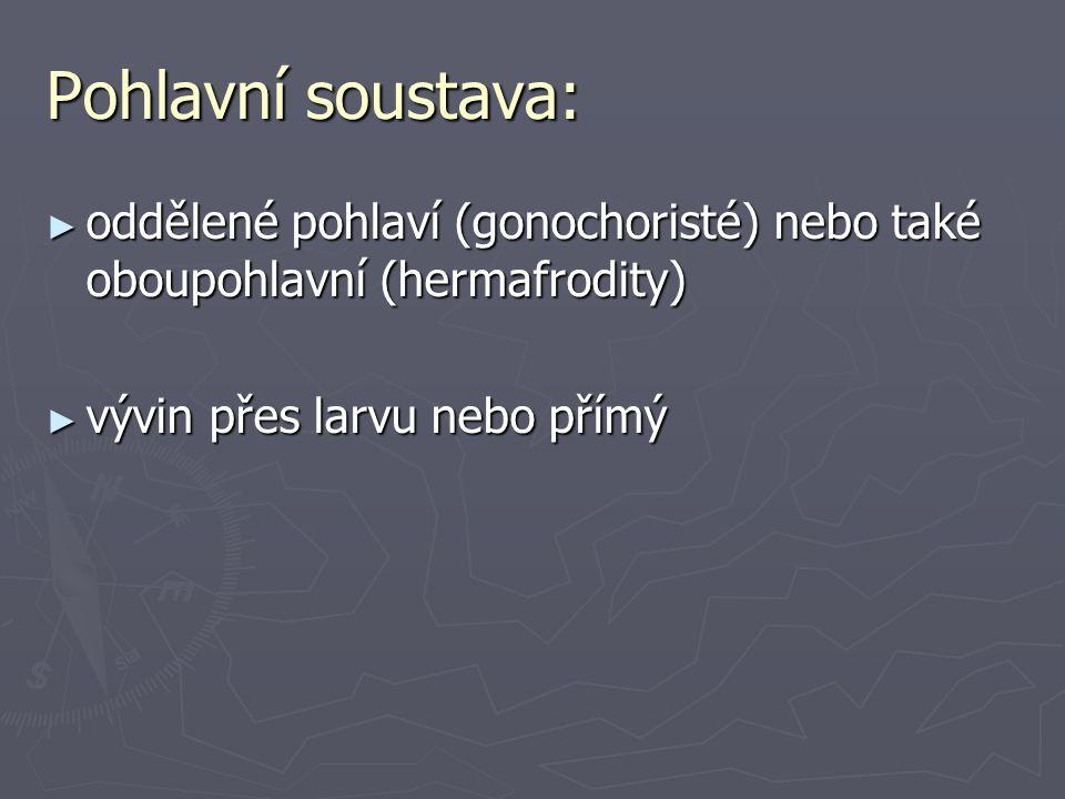 Pohlavní soustava: ► oddělené pohlaví (gonochoristé) nebo také oboupohlavní (hermafrodity) ► vývin přes larvu nebo přímý
