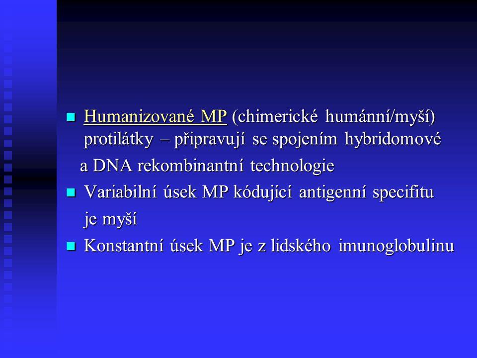 Humanizované MP (chimerické humánní/myší) protilátky – připravují se spojením hybridomové Humanizované MP (chimerické humánní/myší) protilátky – připr