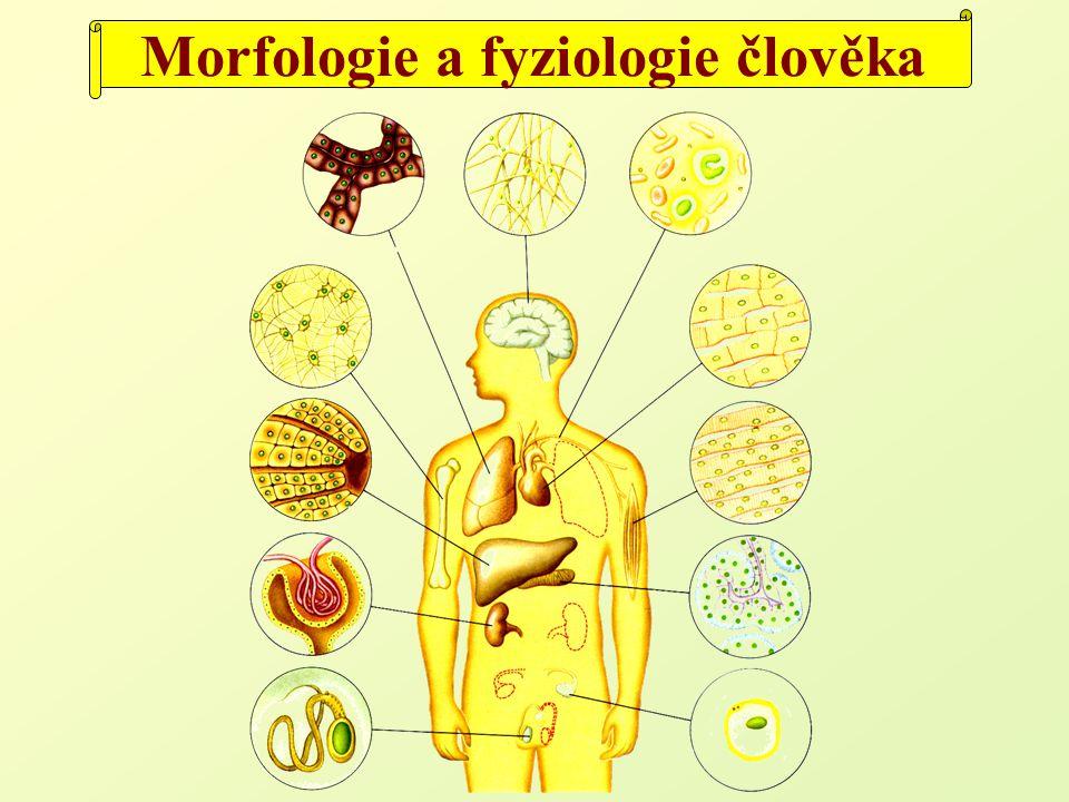 Morfologie a fyziologie člověka