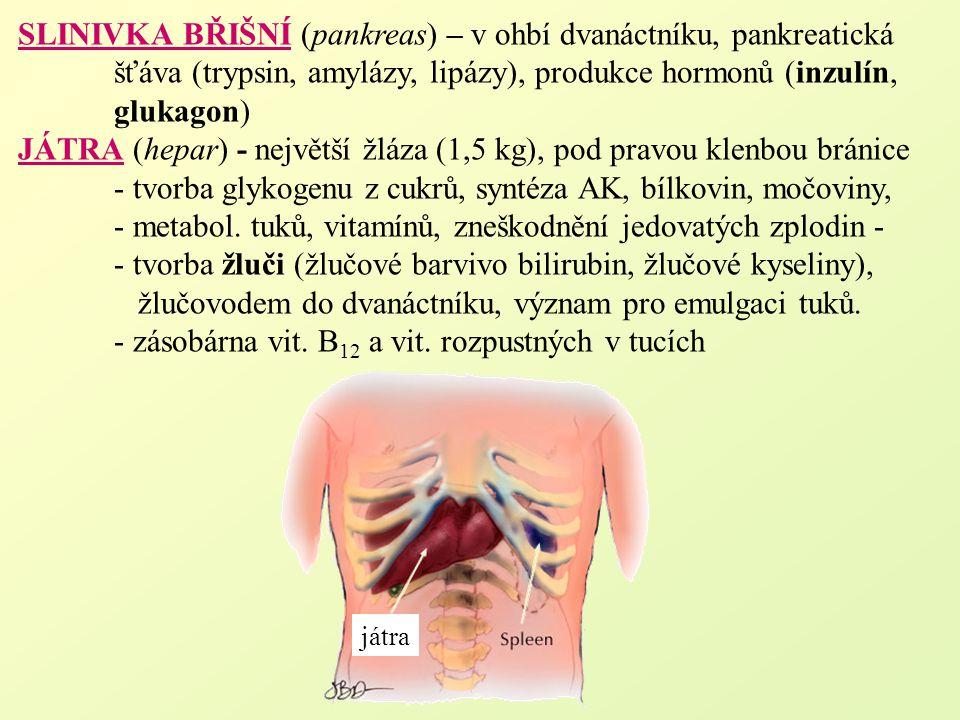 SLINIVKA BŘIŠNÍ (pankreas) – v ohbí dvanáctníku, pankreatická šťáva (trypsin, amylázy, lipázy), produkce hormonů (inzulín, glukagon) JÁTRA (hepar) - n
