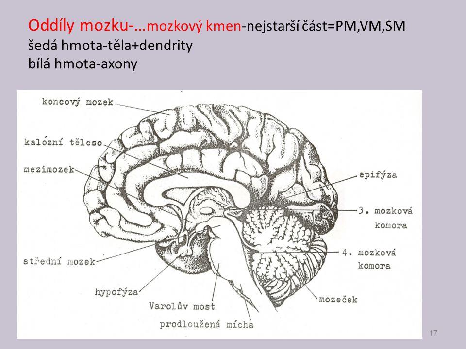 Oddíly mozku-… mozkový kmen-nejstarší část=PM,VM,SM šedá hmota-těla+dendrity bílá hmota-axony 17