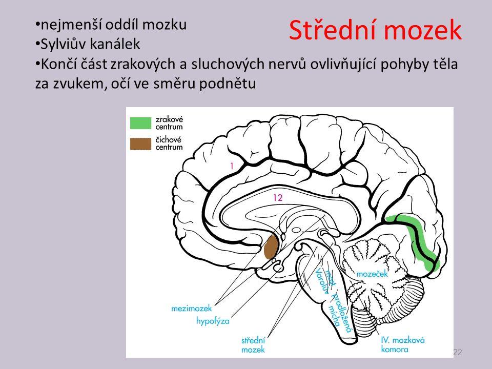 Střední mozek nejmenší oddíl mozku Sylviův kanálek Končí část zrakových a sluchových nervů ovlivňující pohyby těla za zvukem, očí ve směru podnětu 22