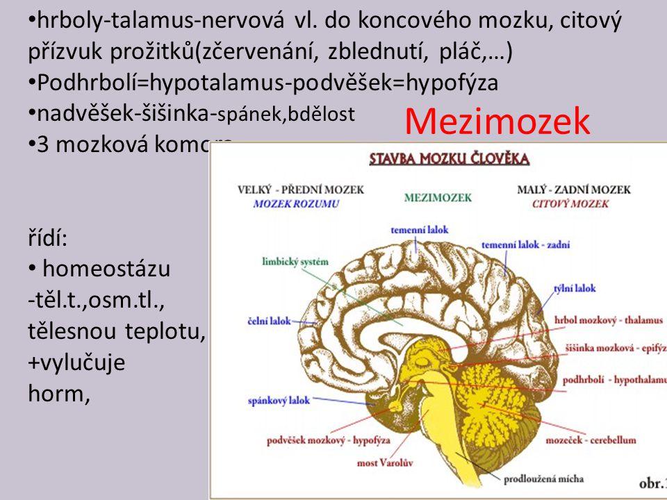 Mezimozek hrboly-talamus-nervová vl. do koncového mozku, citový přízvuk prožitků(zčervenání, zblednutí, pláč,…) Podhrbolí=hypotalamus-podvěšek=hypofýz