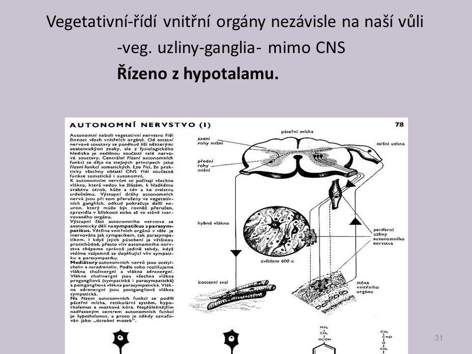 Vegetativní-řídí vnitřní orgány nezávisle na naší vůli -veg. uzliny-ganglia- mimo CNS Řízeno z hypotalamu. 31