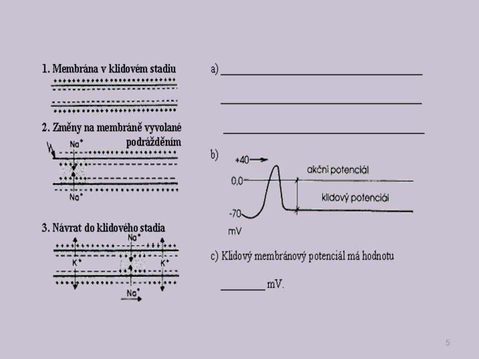 Reflex- funkční jednotka nerv.řízení-reflexní oblouk -5částí 16