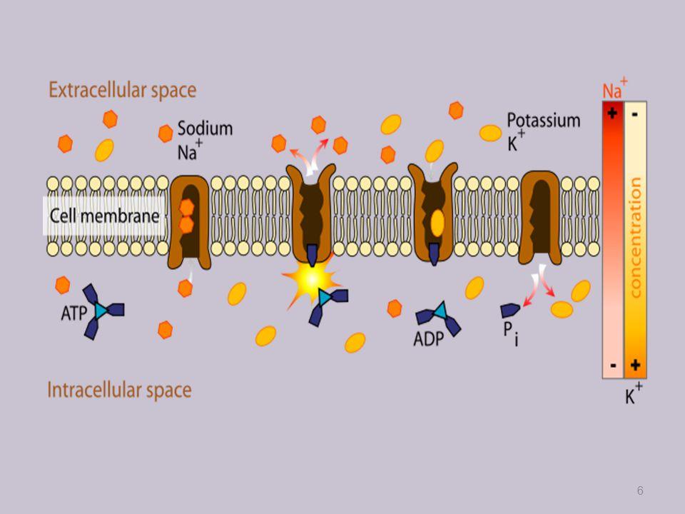 Směr šíření vzruchu synapse-budivé-mediátory-acetylcholin, noradrenalin tlumivé-mediátory-kys.gama-aminomáselná 7