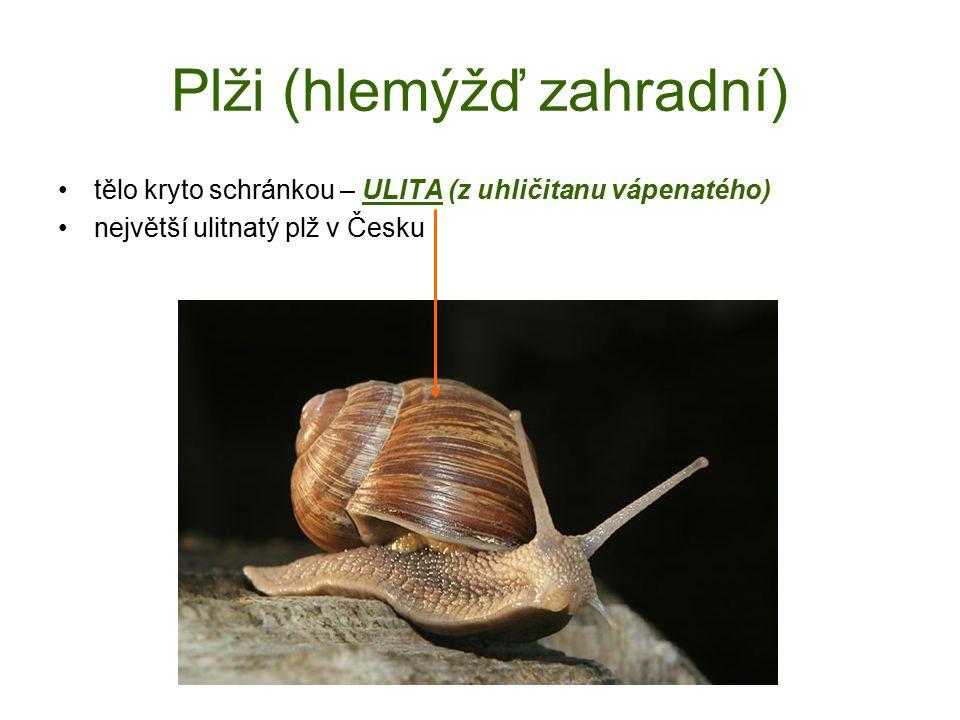 Plži (hlemýžď zahradní) tělo kryto schránkou – ULITA (z uhličitanu vápenatého) největší ulitnatý plž v Česku