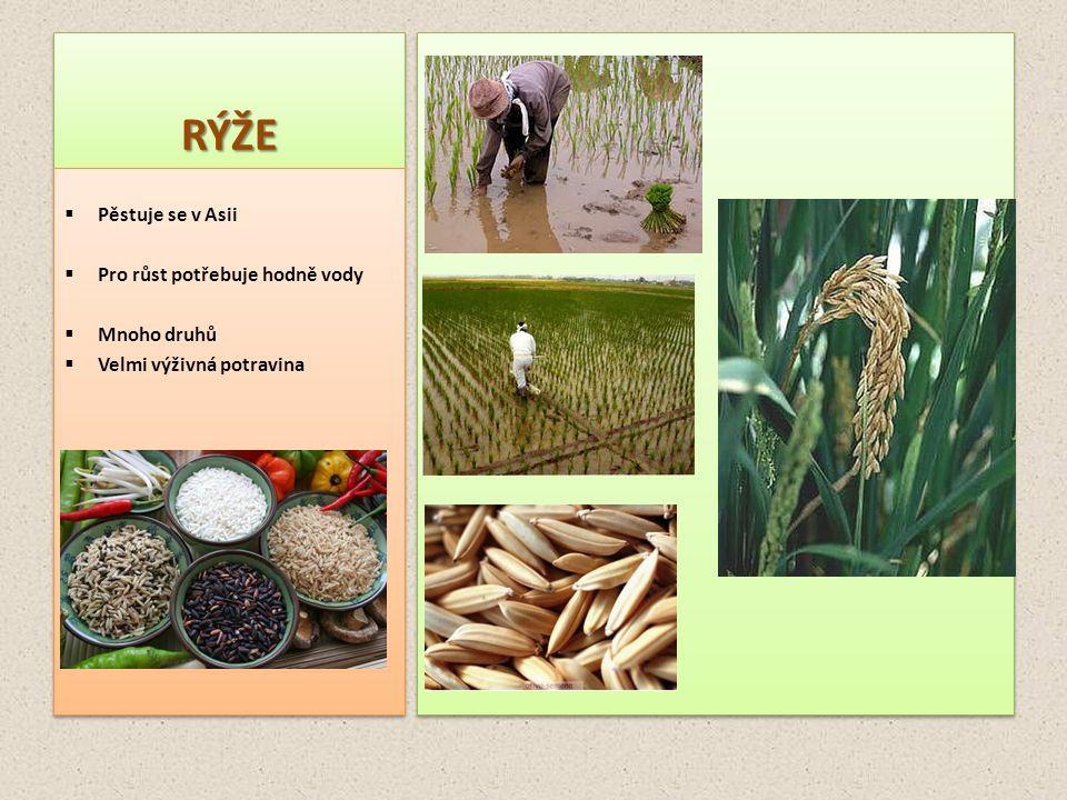 RÝŽERÝŽE  Pěstuje se v Asii  Pro růst potřebuje hodně vody  Mnoho druhů  Velmi výživná potravina  Pěstuje se v Asii  Pro růst potřebuje hodně vo
