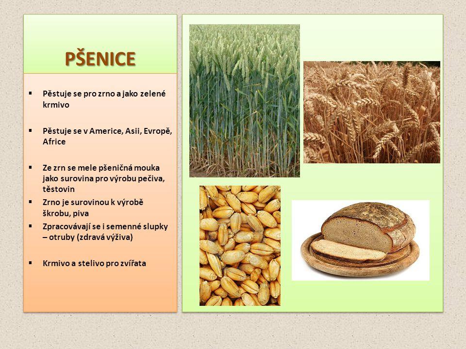 JEČMENJEČMEN  Pěstuje se pro zrno a jako zelené krmivo  Pěstuje se po celém světě, snáší i horší podmínky pro pěstování (chladno méně vláhy)  Zrno je surovinou k výrobě sladu  Ze zrn se zpracovávají ječné kroupy a krupky, sloužící jako přísada do polévek a dušených jídel  Zpracovávají se i semenné slupky – otruby (zdravá výživa)  Z ječmene se připravuje náhražka kávy – melta  Krmivo a stelivo pro zvířata.