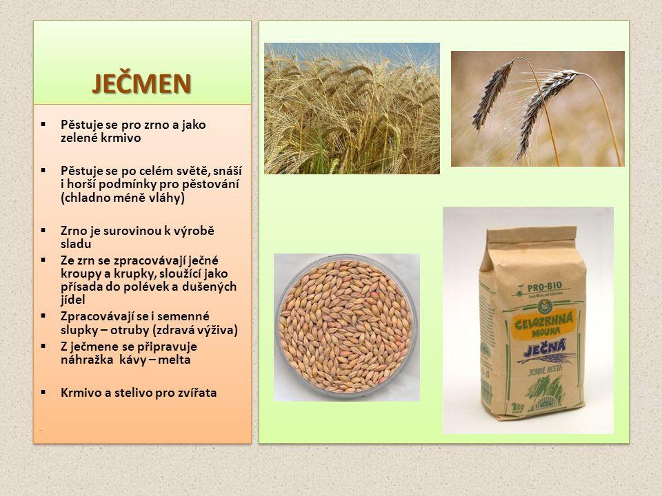 JEČMENJEČMEN  Pěstuje se pro zrno a jako zelené krmivo  Pěstuje se po celém světě, snáší i horší podmínky pro pěstování (chladno méně vláhy)  Zrno