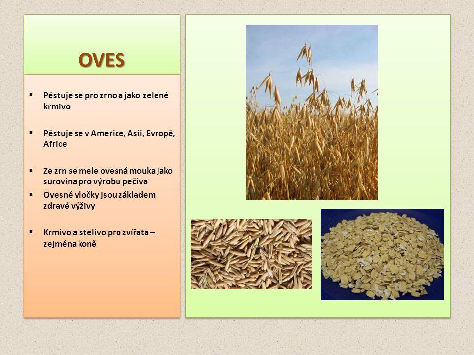 OVESOVES  Pěstuje se pro zrno a jako zelené krmivo  Pěstuje se v Americe, Asii, Evropě, Africe  Ze zrn se mele ovesná mouka jako surovina pro výrob