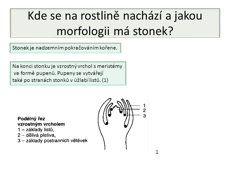 Kde se na rostlině nachází a jakou morfologii má stonek? Stonek je nadzemním pokračováním kořene. Na konci stonku je vzrostný vrchol s meristémy ve fo