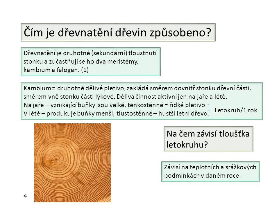 Čím je dřevnatění dřevin způsobeno? Dřevnatění je druhotné (sekundární) tloustnutí stonku a zúčastňují se ho dva meristémy, kambium a felogen. (1) Kam