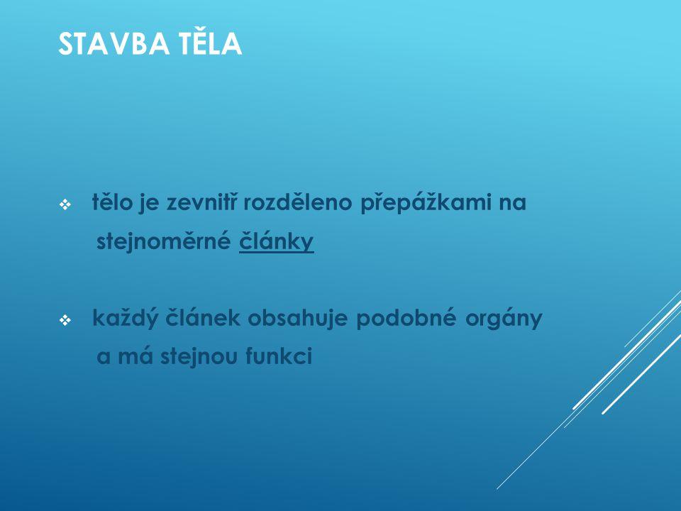 STAVBA TĚLA  tělo je zevnitř rozděleno přepážkami na stejnoměrné články  každý článek obsahuje podobné orgány a má stejnou funkci