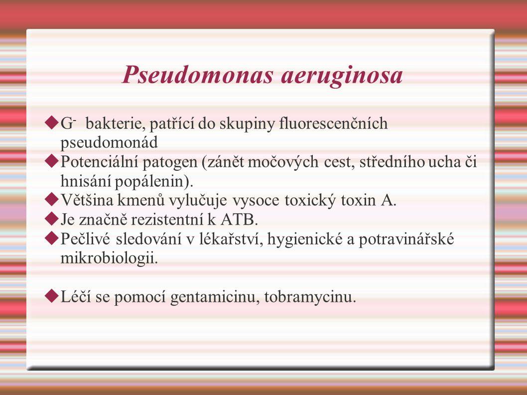 Pseudomonas aeruginosa  G - bakterie, patřící do skupiny fluorescenčních pseudomonád  Potenciální patogen (zánět močových cest, středního ucha či hnisání popálenin).