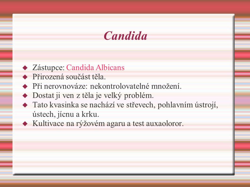 Candida  Zástupce: Candida Albicans  Přirozená součást těla.