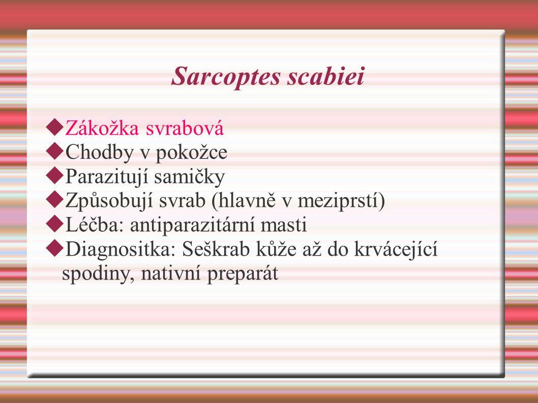 Sarcoptes scabiei  Zákožka svrabová  Chodby v pokožce  Parazitují samičky  Způsobují svrab (hlavně v meziprstí)  Léčba: antiparazitární masti  Diagnositka: Seškrab kůže až do krvácející spodiny, nativní preparát