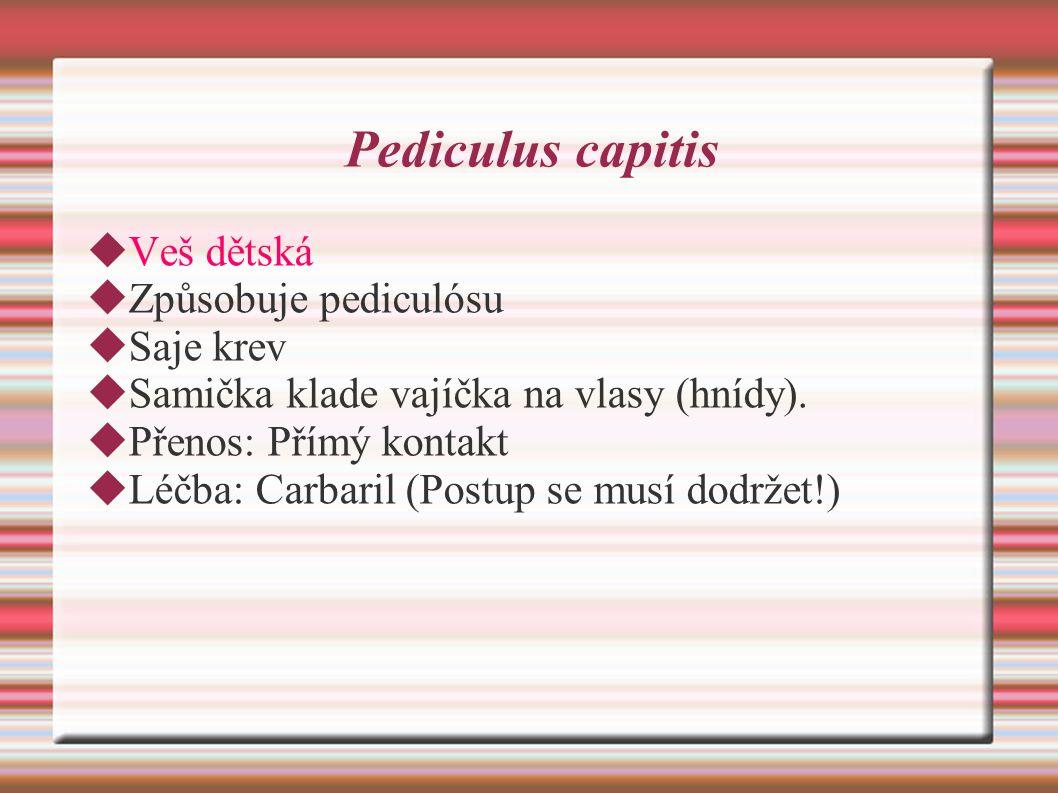 Pediculus capitis  Veš dětská  Způsobuje pediculósu  Saje krev  Samička klade vajíčka na vlasy (hnídy).