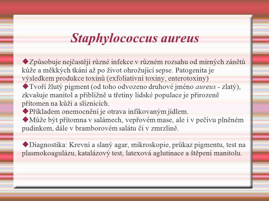 Staphylococcus aureus  Způsobuje nejčastěji různé infekce v různém rozsahu od mírných zánětů kůže a měkkých tkání až po život ohrožující sepse.