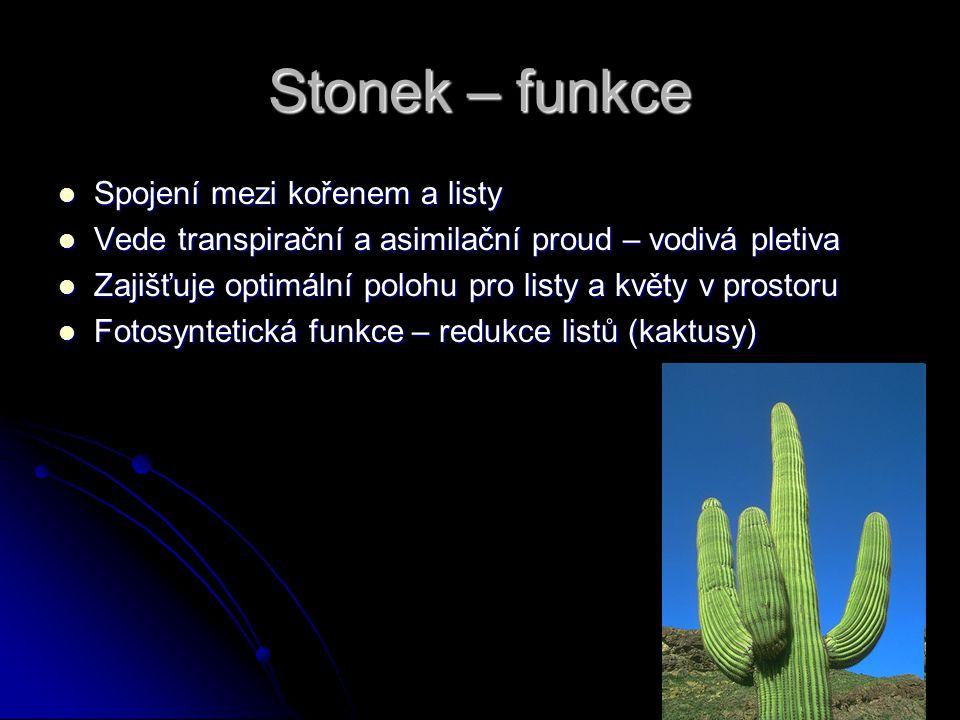 Stonek – funkce Spojení mezi kořenem a listy Spojení mezi kořenem a listy Vede transpirační a asimilační proud – vodivá pletiva Vede transpirační a as