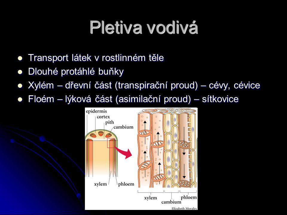 Pletiva vodivá Transport látek v rostlinném těle Transport látek v rostlinném těle Dlouhé protáhlé buňky Dlouhé protáhlé buňky Xylém – dřevní část (tr