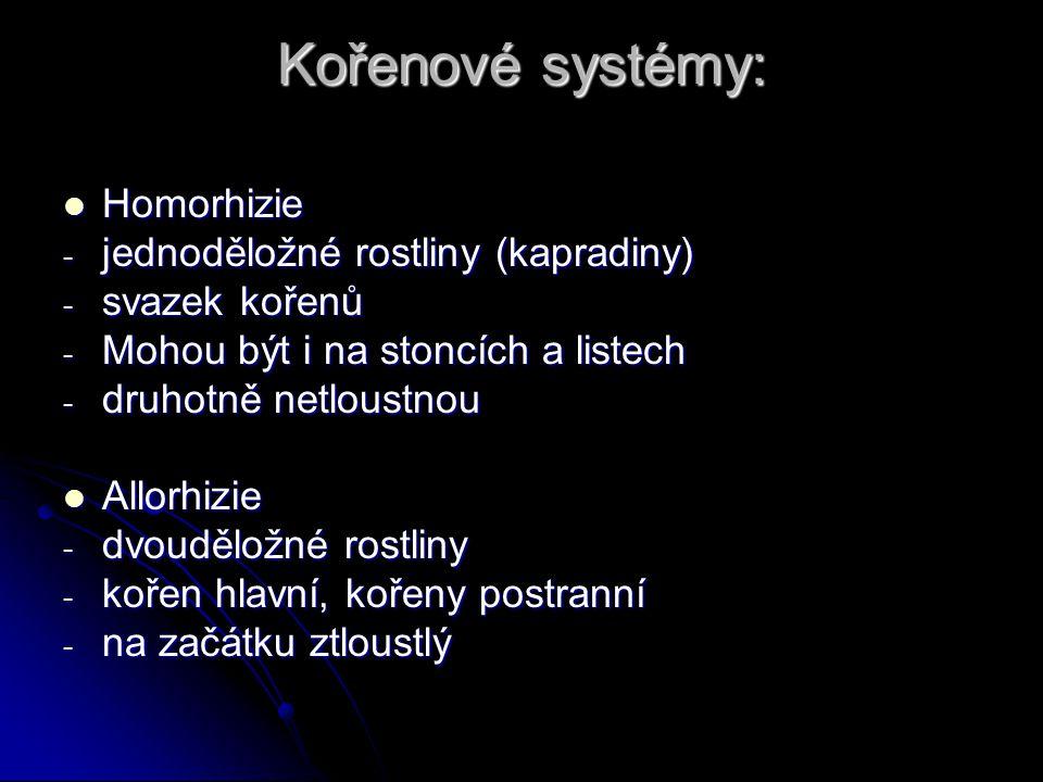 Kořenové systémy: Homorhizie Homorhizie - jednoděložné rostliny (kapradiny) - svazek kořenů - Mohou být i na stoncích a listech - druhotně netloustnou