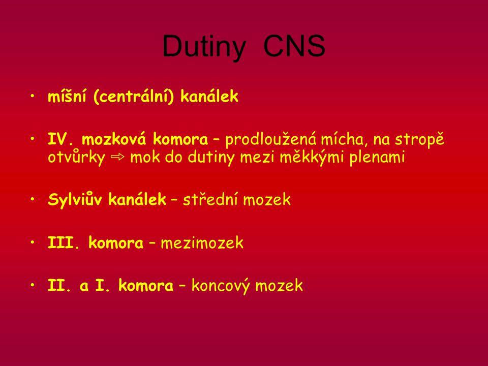 Dutiny CNS míšní (centrální) kanálek IV.