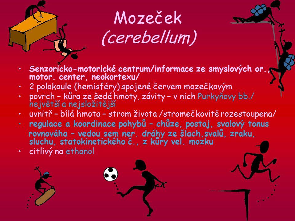 Mozeček (cerebellum) Senzoricko-motorické centrum/informace ze smyslových or., motor.