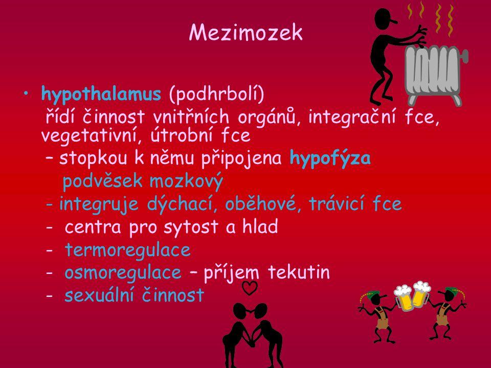 hypothalamus (podhrbolí) řídí činnost vnitřních orgánů, integrační fce, vegetativní, útrobní fce – stopkou k němu připojena hypofýza podvěsek mozkový - integruje dýchací, oběhové, trávicí fce - centra pro sytost a hlad - termoregulace - osmoregulace – příjem tekutin - sexuální činnost Mezimozek