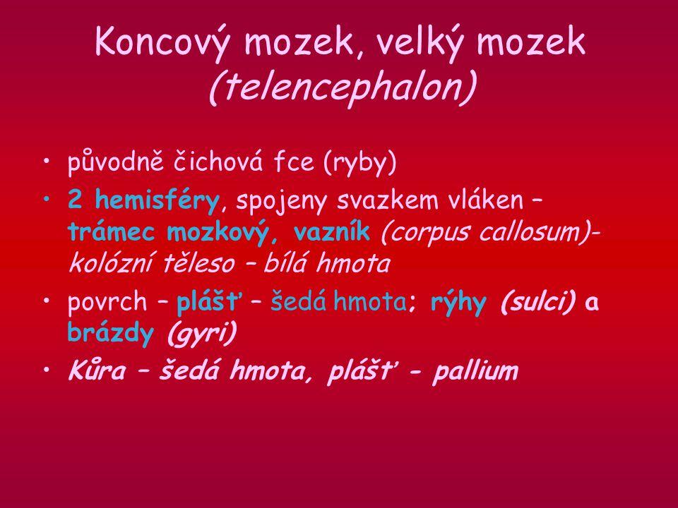 Koncový mozek, velký mozek (telencephalon) původně čichová fce (ryby) 2 hemisféry, spojeny svazkem vláken – trámec mozkový, vazník (corpus callosum)- kolózní těleso – bílá hmota povrch – plášť – šedá hmota; rýhy (sulci) a brázdy (gyri) Kůra – šedá hmota, plášť - pallium