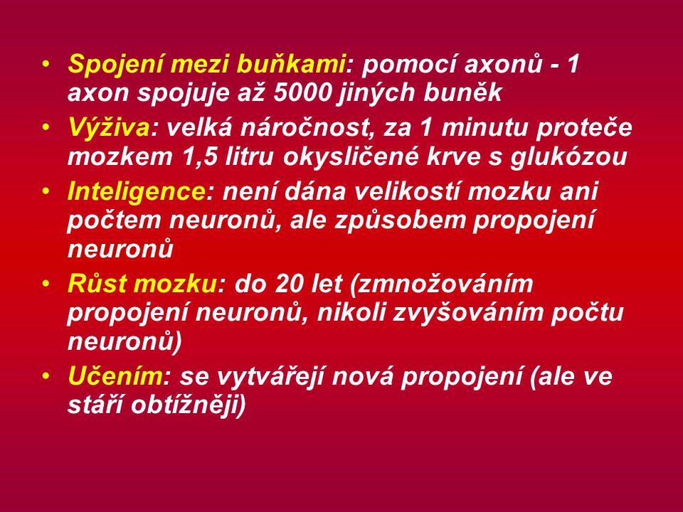 Spojení mezi buňkami: pomocí axonů - 1 axon spojuje až 5000 jiných buněk Výživa: velká náročnost, za 1 minutu proteče mozkem 1,5 litru okysličené krve s glukózou Inteligence: není dána velikostí mozku ani počtem neuronů, ale způsobem propojení neuronů Růst mozku: do 20 let (zmnožováním propojení neuronů, nikoli zvyšováním počtu neuronů) Učením: se vytvářejí nová propojení (ale ve stáří obtížněji)