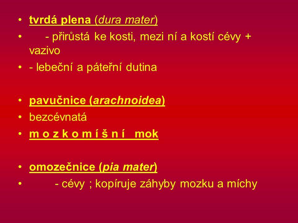 tvrdá plena (dura mater) - přirůstá ke kosti, mezi ní a kostí cévy + vazivo - lebeční a páteřní dutina pavučnice (arachnoidea) bezcévnatá m o z k o m í š n í mok omozečnice (pia mater) - cévy ; kopíruje záhyby mozku a míchy