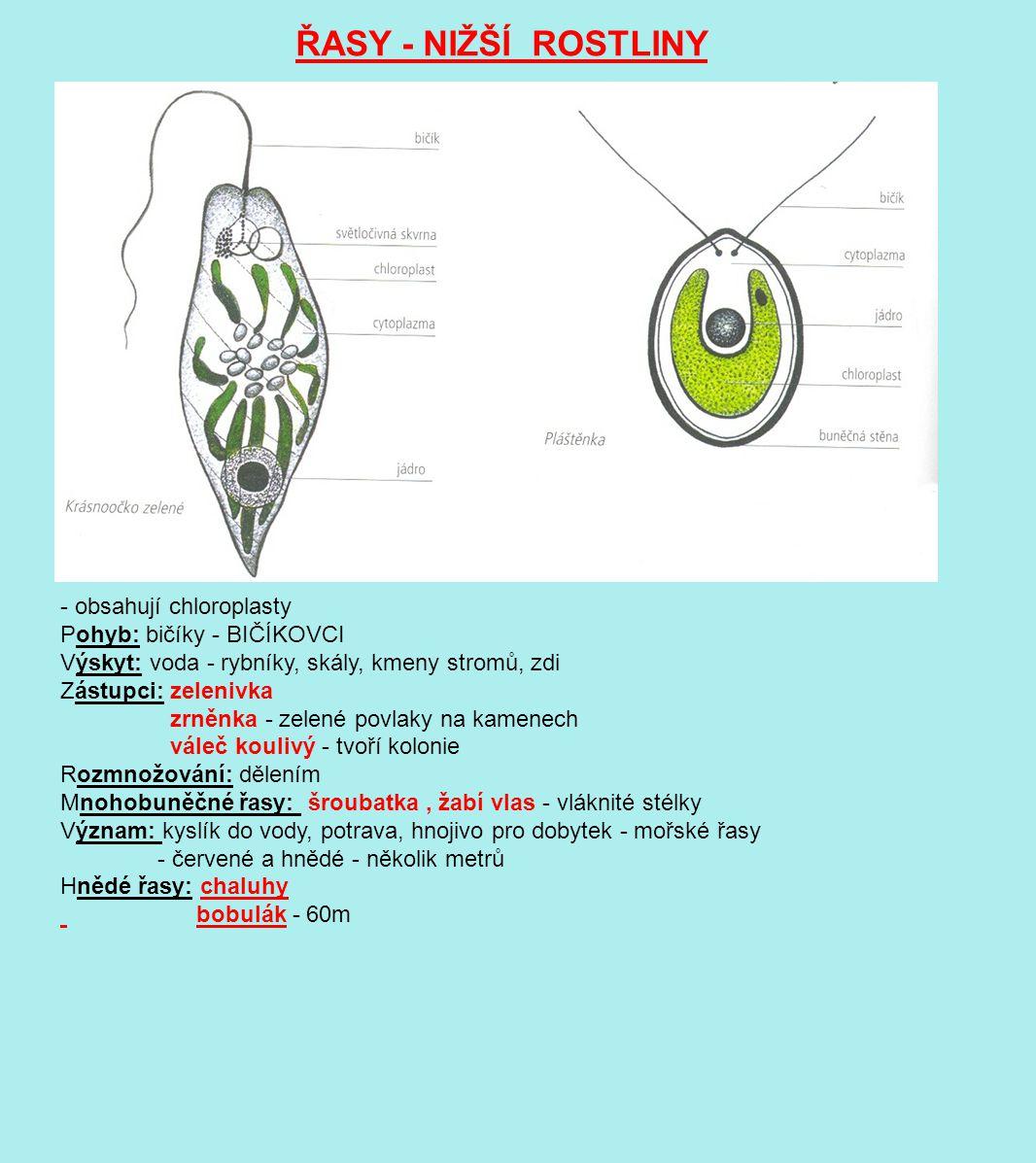 ŘASY - NIŽŠÍ ROSTLINY krásnoočko pláštěnka - obsahují chloroplasty Pohyb: bičíky - BIČÍKOVCI Výskyt: voda - rybníky, skály, kmeny stromů, zdi Zástupci