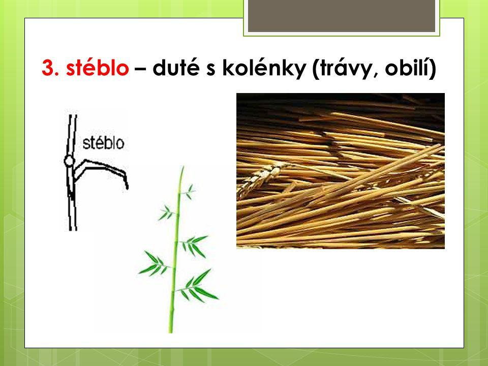 3. stéblo – duté s kolénky (trávy, obilí)