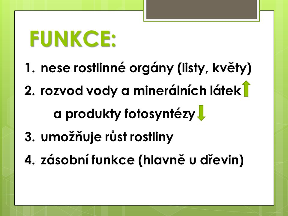 1.nese rostlinné orgány (listy, květy) 2.rozvod vody a minerálních látek a produkty fotosyntézy 3.umožňuje růst rostliny 4.zásobní funkce (hlavně u dřevin) FUNKCE: