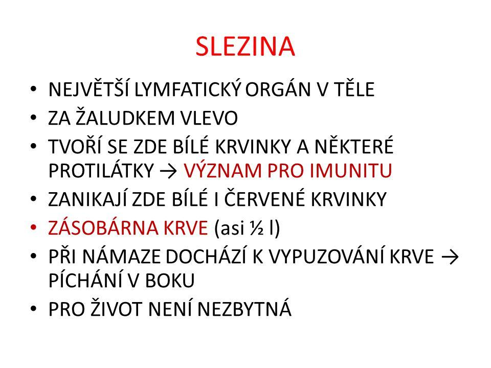 SLEZINA 2 ŽALUDEK