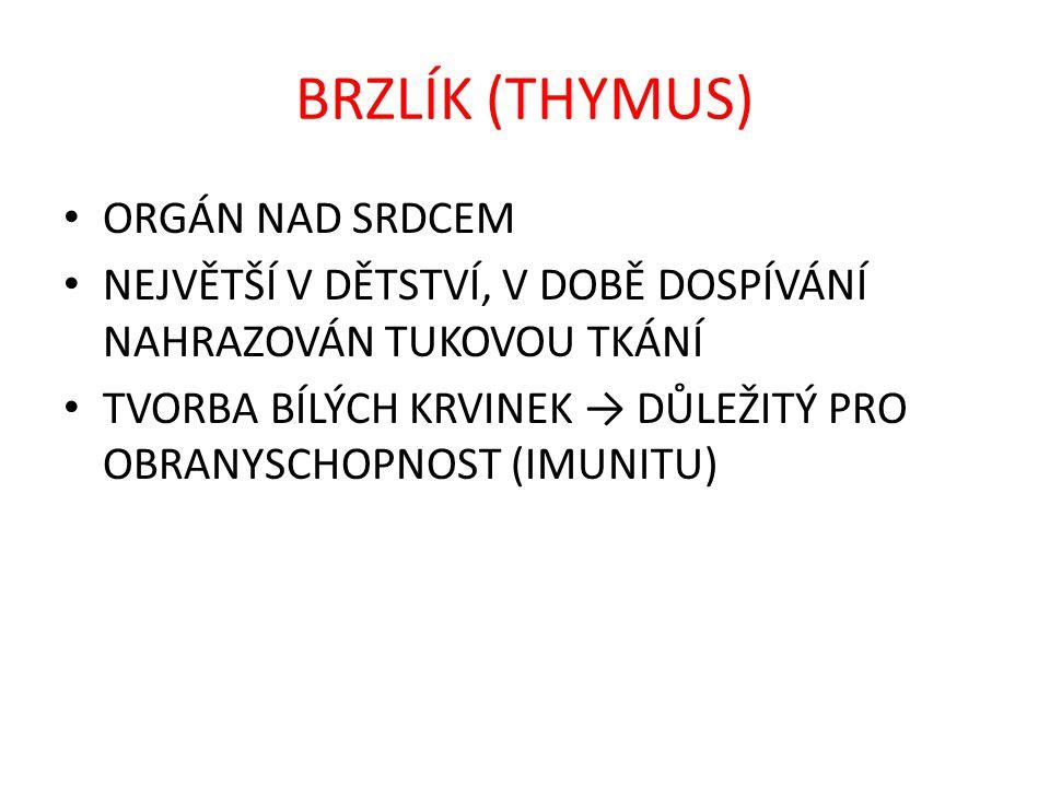 SLEZINA BRZLÍK 3